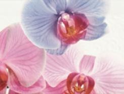 Decor Orchidea 1 Декор 10x20