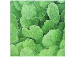 Плитка Lotus Estanque Viejo Verde 30x30
