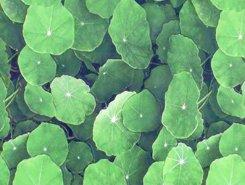 Плитка Lotus Verde 30x45